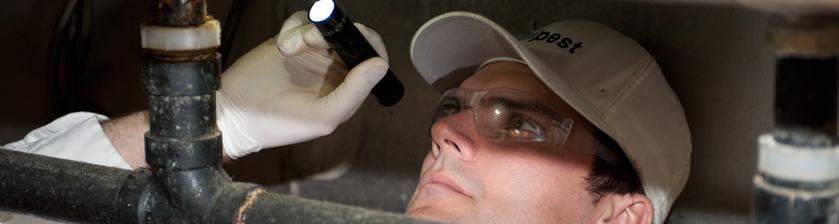 Unipest - Pest Control in Santa Clarita