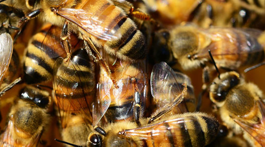 Two Important Parts Of Bee Hive Removal Discussed By Expert On Pest Control In Santa Clarita