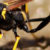 Unipest Gives Tips For DIY Pest Control In Santa Clarita: Mud Dauber Wasps